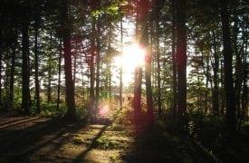 Cavendish Sunset Campground
