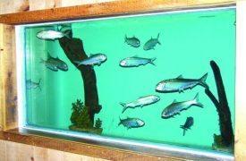 Stanley Bridge Marine Aquarium, Manor of Birds and Gift Shop